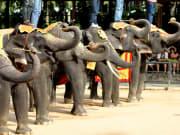 Elephant show_127287947