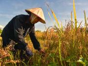 Vietnamese farmer working
