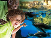SeaWorld_San_Diego