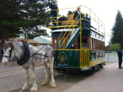 Horse-drawn Tram to Granite Island