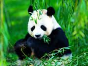 Beijing Panda Garden