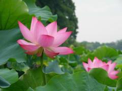 Hangzhou_Heaven_on_Earth_Day (7)
