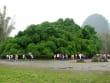 Yangshuo_Big Banyan  (2)