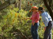 walk-through-wildflowers-perth-western-australia-1024x768