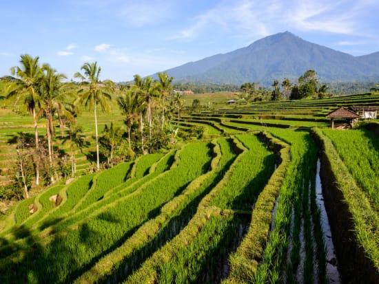 Jatiluwih Rice Terraces And Batukaru Mountain Tour In Bali Bali