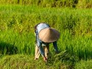 Jatiluwih rice fields_shutterstock (2)