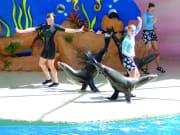 USA_Florida_Miami Seaquarium sea lion tricks