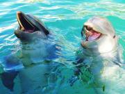 USA_Florida_Miami Seaquarium Dolphins
