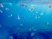 USA_Florida_Key West Snorkeling Beach
