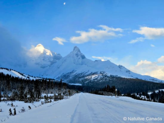 Icefield-Parkway-15