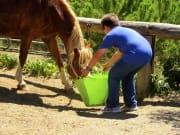 Spain_Barcelona_Horse Feeding