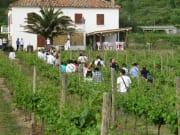 konavle_vineyards_excursion_(18)_124816