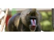 11354_original_celona_Zoo_General_Admission (2)
