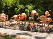 Flamingo, Barcelona Zoo