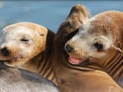 usa_california_sea lions_cruise