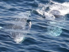 whales_close_gallery