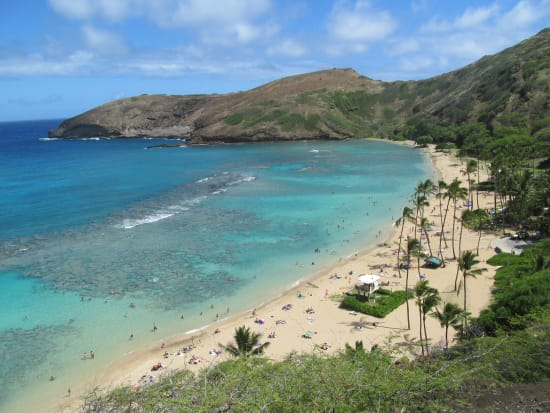 Get A Ride To Hanauma Bay With Reliable And Affordable Shuttle Service From Waikiki Swim Among Turtles Tropical Fishes At Hawaii S 1 Snorkel