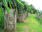 9552_original_Tropical_Fruit_Farm_1365996720
