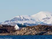 sea-birds-winter-2