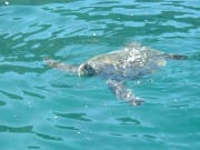 USA_Hawaii_Molokini-Snorkel_Sea-Turtle-Sighting