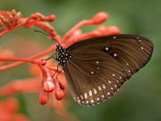 butterfly perched on red flower
