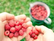 Raspberry_006_elina_5911_3