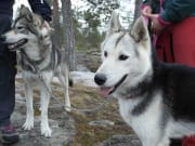 Husky-Hike-in-the-Nature2