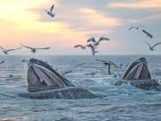 whales_bosto01