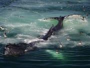whales_boston05