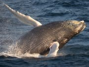 whales_boston03