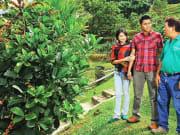 tropical fruit farm 1