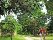 tropical fruit farm 2
