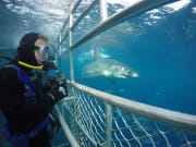 White Shark Cage Diving Tour