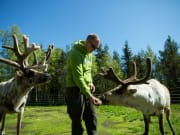Reindeer farm in Lapland (Flatlight Creative)