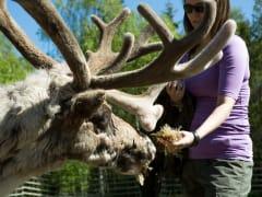 Reindeer farm in Lapland (Flatlight Creative)