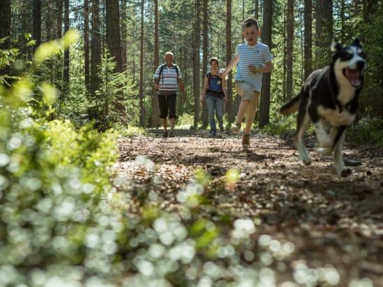 Husky in Lapland (photo by Flatlight Creative)10