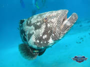 Great Barrier Reef Tour Diverse Aquatic Life