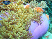 Great Barrier Reef Tour Corals Anemone