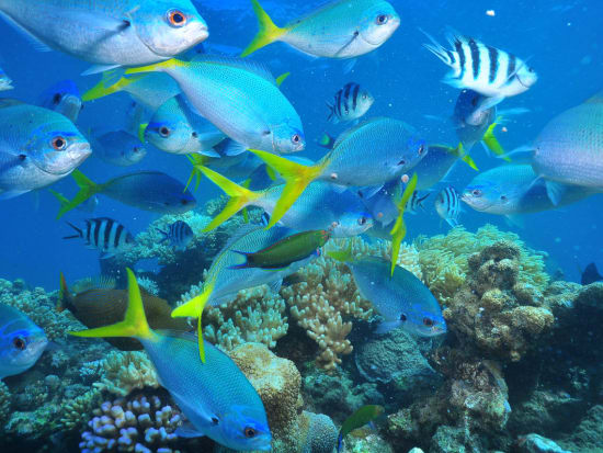gi-tour-green-island-marinelife-04