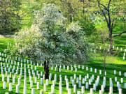 USA_Washington DC_Arlington Cemetery