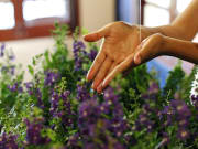 lavender_largesize_01_middlesize