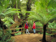 Rainforest eco tour Great Otway National Park