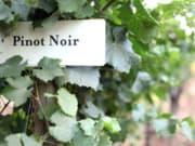 Pinot-Noirs-300x200