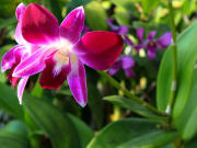 orchid-2088597_1920