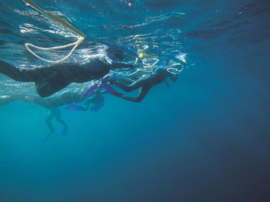 Swimmers on line credit from below Brett Wortman