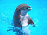 USA_San Diego_Five Star Tours_Sea World Dolphin