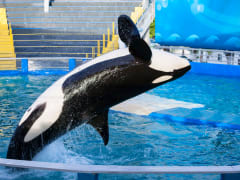 USA_San Diego_Five Star Tours_Sea World Whale