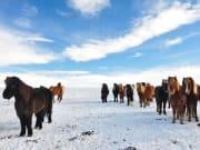 Winter horse riding, Golden Circle