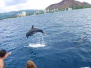 Holokai Dolphin 01