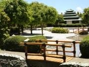 Mogambo Springs 1